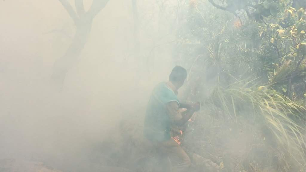 TTD Forest Fire