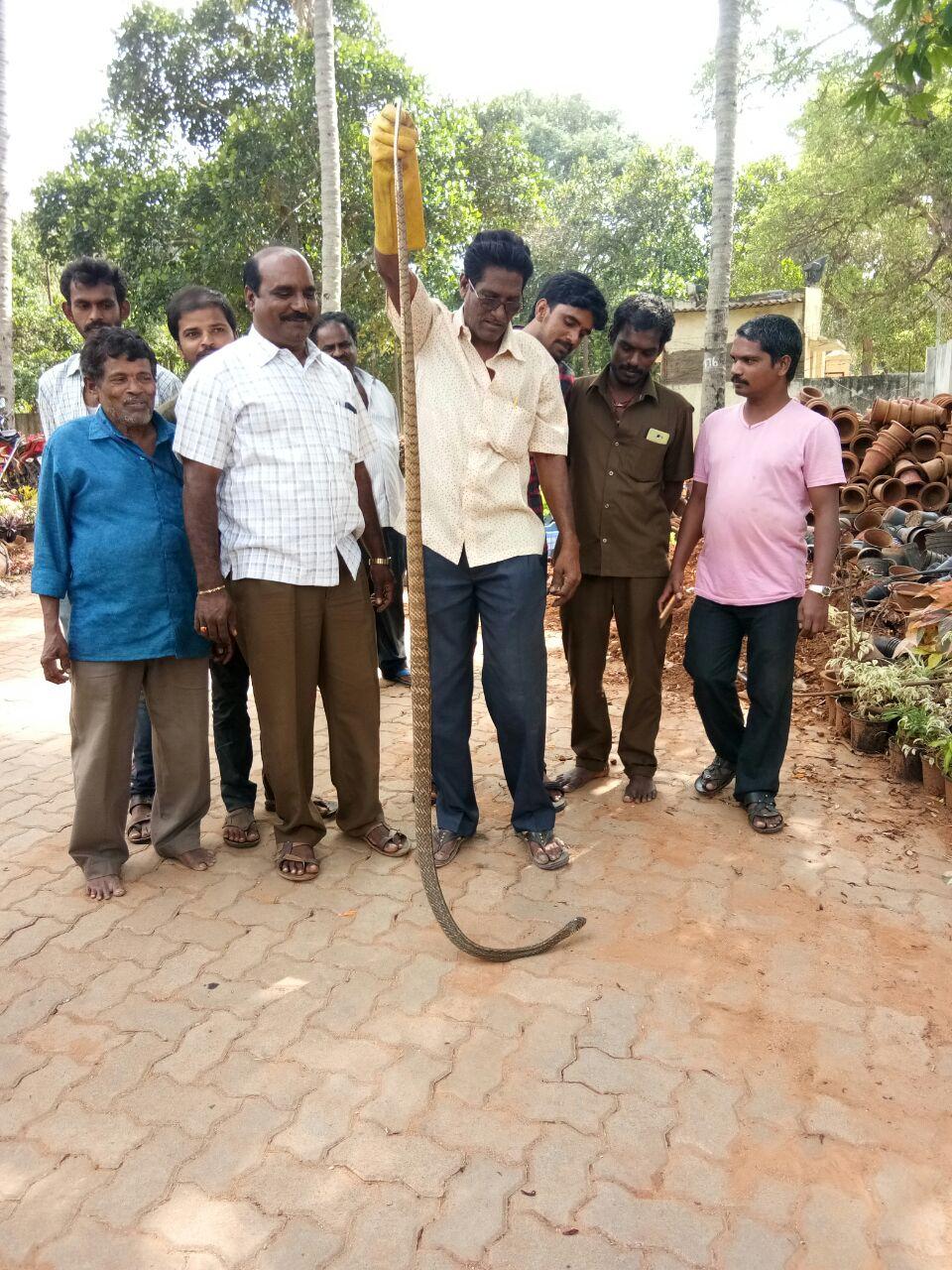 snake 1 tirumala